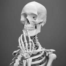 Carousel_image_98a846e327d079b0534e_carousel_image_394cc0778dd88278f32f_indecisive-skeleton500