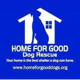 Home for Good:  Dog of the Week