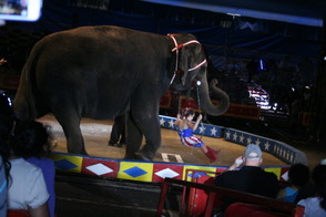 Cole Bros. Circus Concludes Livingston's Memorial Day Weekend Celebration, photo 8