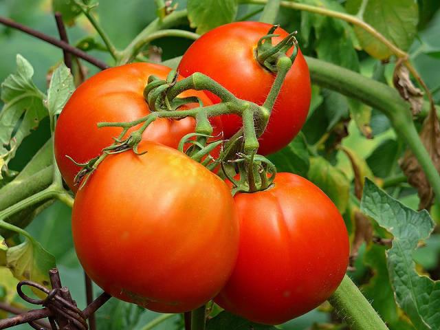 a5991d29df8548ae5d67_d9c0df9e55b2e580d2a9_tomatoes.jpg