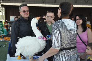 Oliver the goose entertains visitors. The Vernon Township avian has been written about in children's books.