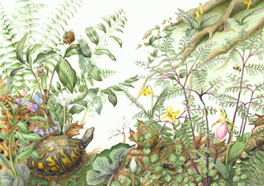 Award-Winning Botanical Artist Exhibits Her Work at Trailside Nature & Science Center, photo 3