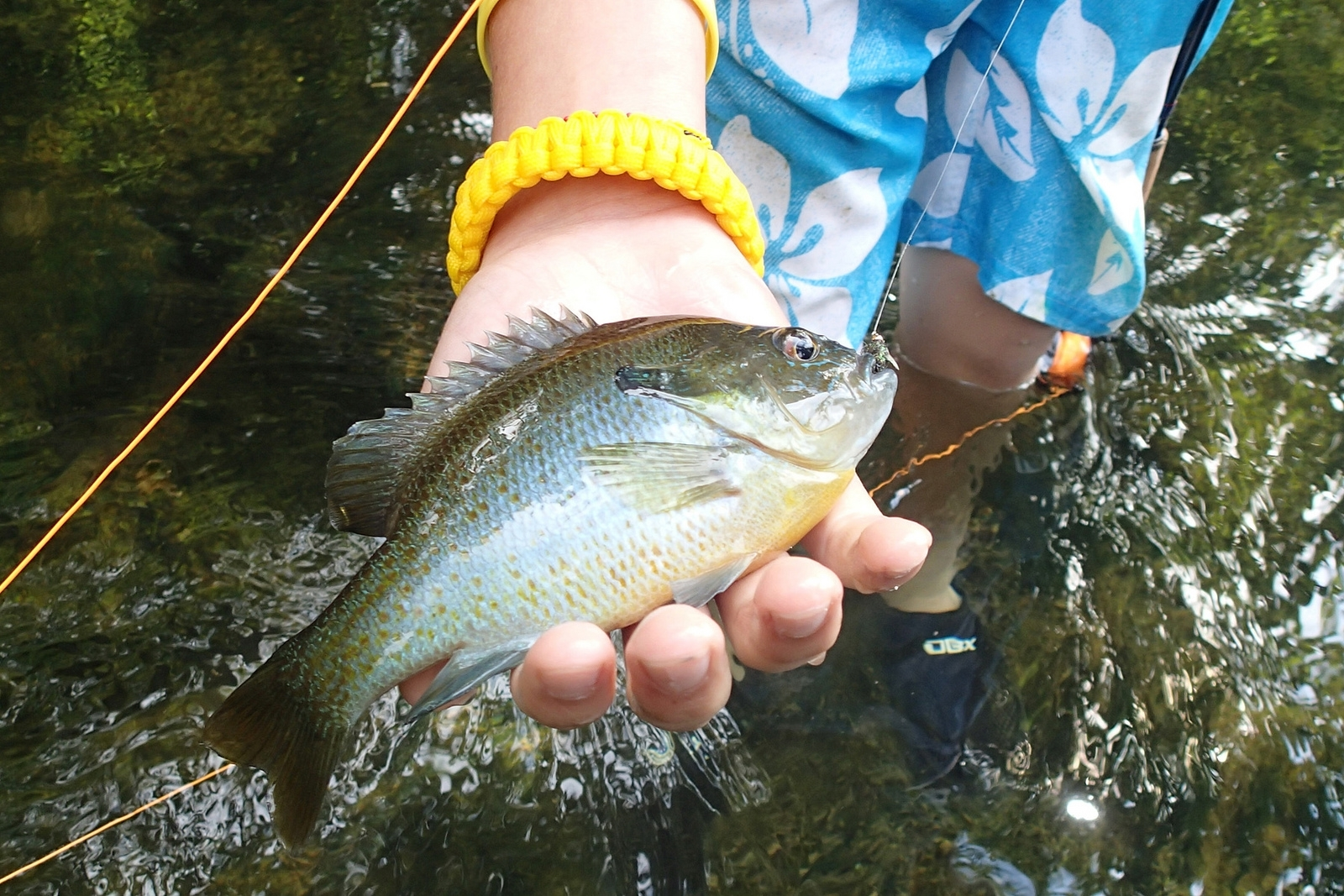 21680e73345f40a853e1_fishing_Project_Healing_Waters_Fly_Fishing_-_Northern_VA.JPG