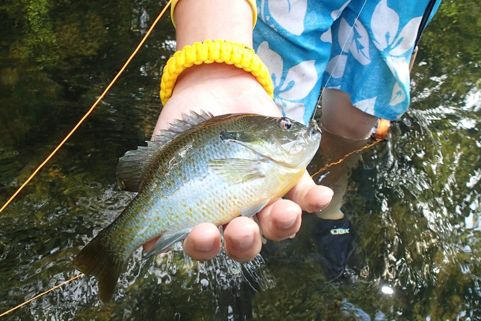 21680e73345f40a853e1_fishing_Project_Healing_Waters_Fly_Fishing_-_Northern_VA.JPG