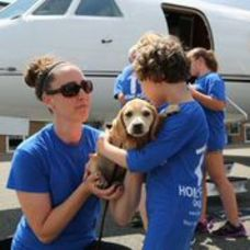 Rescue Dogs Arrive By Jet, photo 2