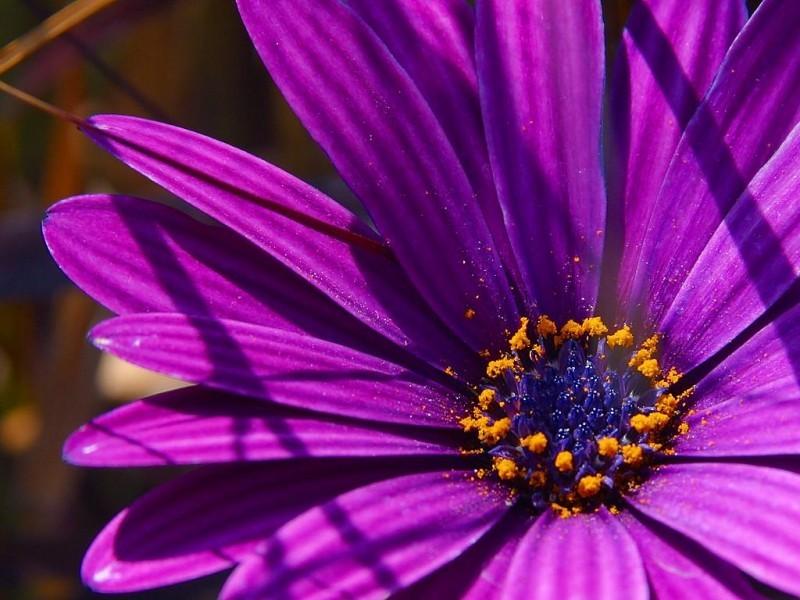 0f86ce49d18194206f81_FloraLogoFlower.jpg