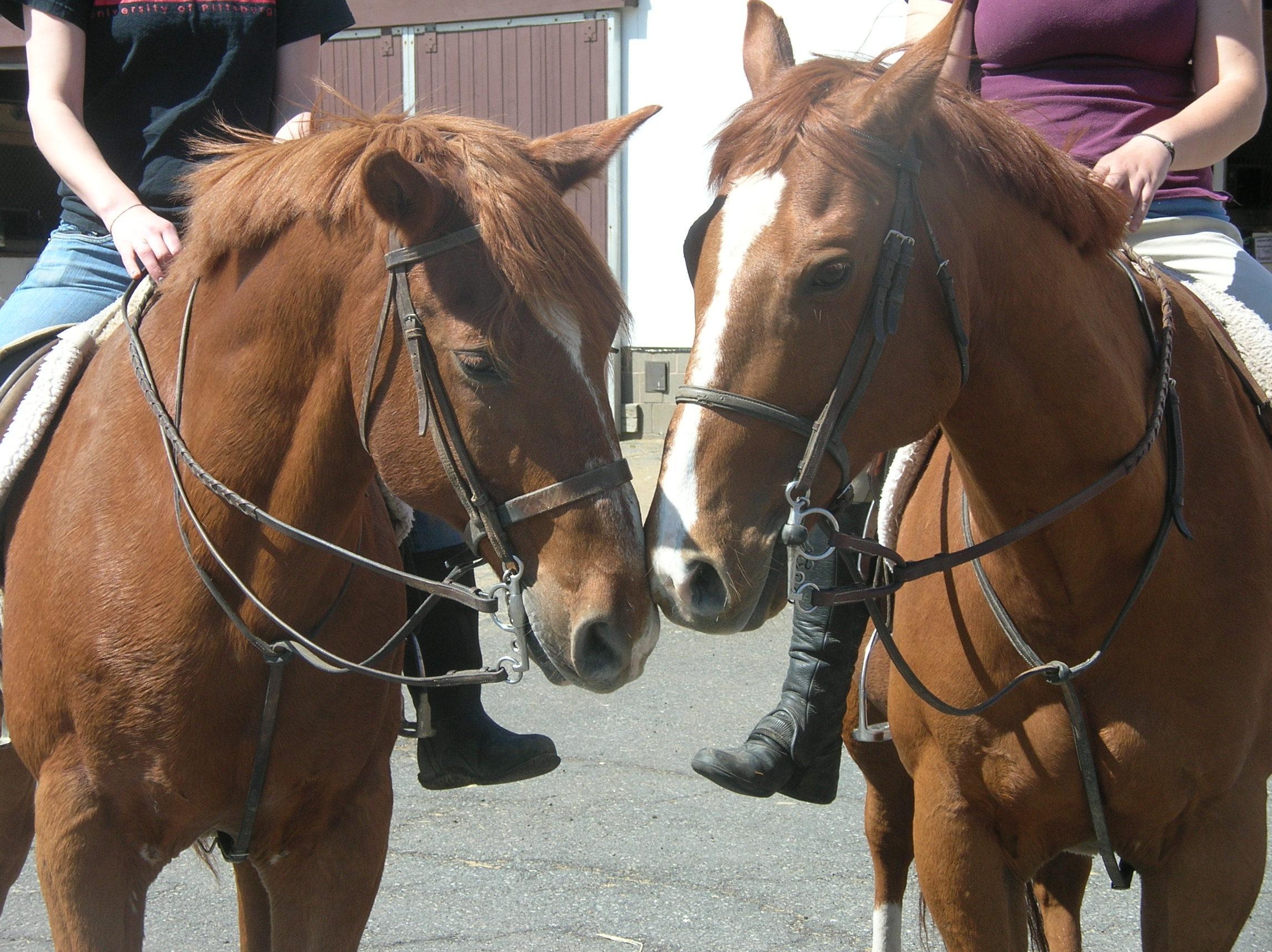 2f6a0cd50c1539fd5ddb_horses_1.JPG