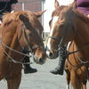 Small_thumb_2f6a0cd50c1539fd5ddb_horses_1