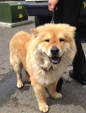 Help me find my owner