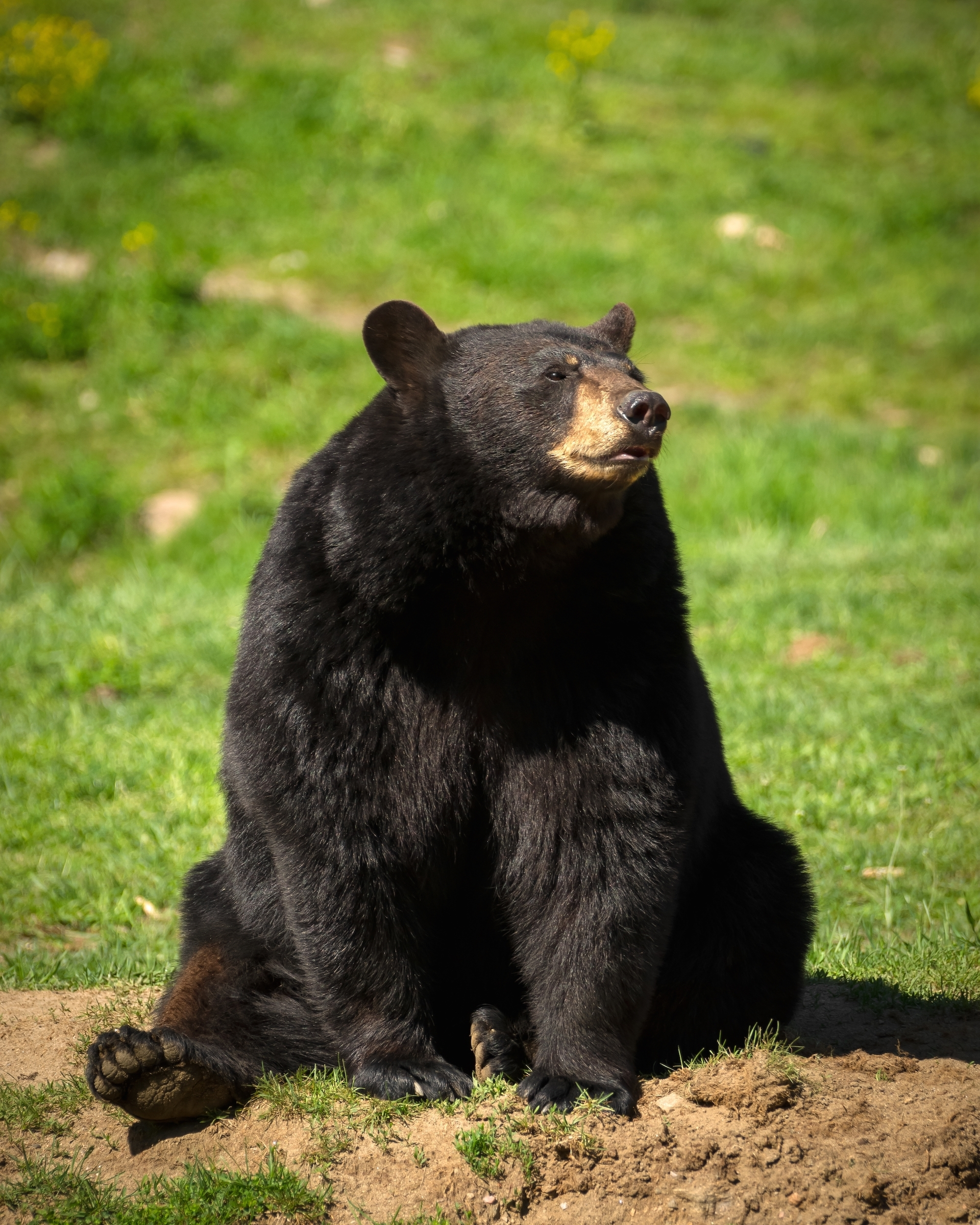 1859f4995c1f2403d389_Bear.jpg