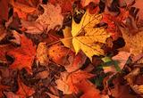 Thumb_b2e135d0d7532a2b6155_leaves