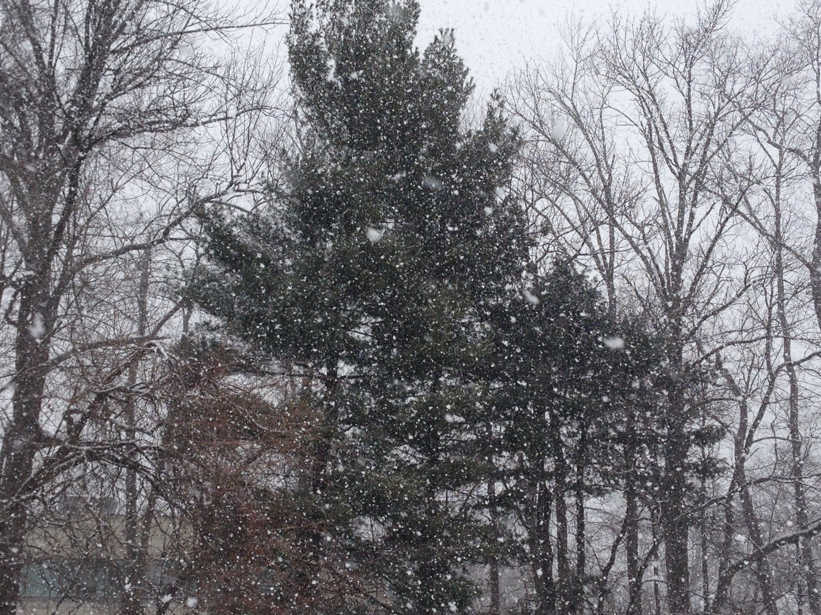 2764e446b0bbd46dde1b_snowing.JPG