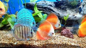 Pet Shanty was known for its wide selection of tropical fish