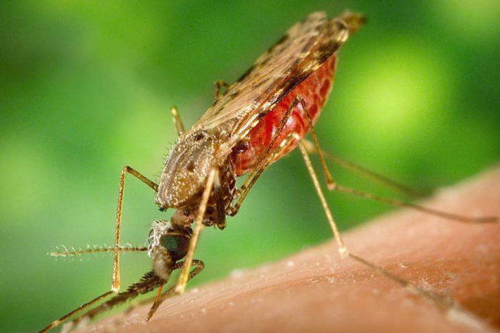 b1cf956ba071a9068ade_371267ae09449bd898ad_mosquito_wiki_by_James_Gathany.jpg