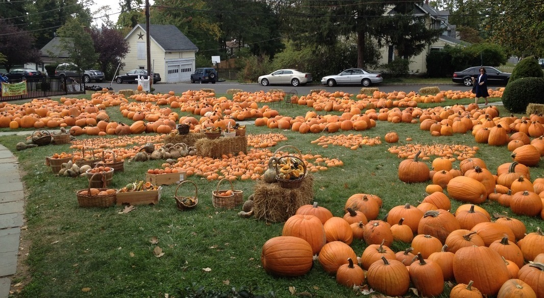 ed2da4a0398d49d75c8a_Wyoming_Presbyterian_Church_-_Pumpkin_Patch.jpg