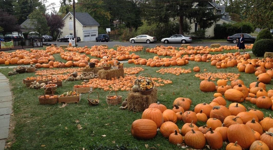 ed2da4a0398d49d75c8a_Wyoming_Presbyterian_Church_-_Pumpkin_Patch.jpg