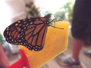 Butterfly Tent Safari