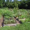 Small_thumb_12aed065038ea2977d32_community_garden
