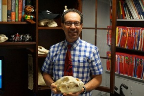 Dr. Geron, oral surgeon and forensic dentist, holds a bear skull he purchased in Alaska that adorns his office.