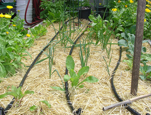 Learn How to Install a Drip Irrigation in Your Garden with the Green Team, photo 1