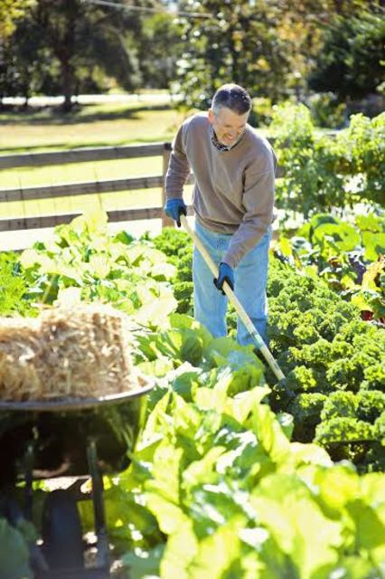 Top_story_b89e60a904015d3fc963_gardening