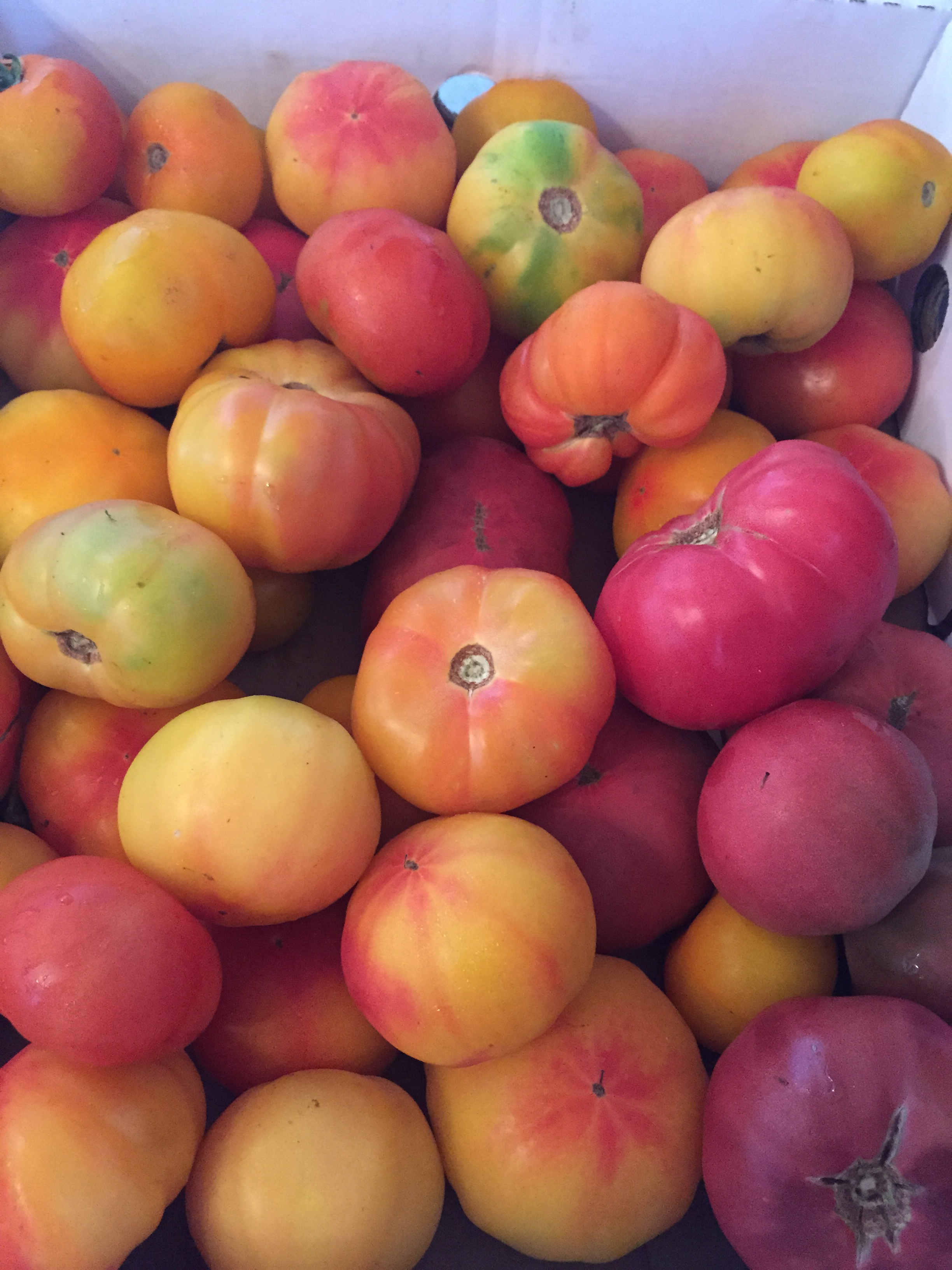 8a01f3979602cd4ee084_baeeb3553e2c90dec566_tomatos.jpg