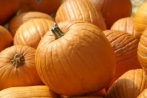 Pumpkin Composting Available October 25 - November 30, photo 1