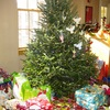 Small_thumb_1def0f051f254c8c7a75_angel_tree_photo_for_nov_2014_giving_release
