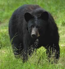 f392cf763d357259f284_bears.jpg
