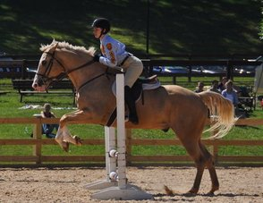 Beginners Encouraged to Learn Horseback Riding at Union County's Watchung Stable, photo 1