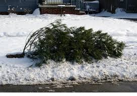 cf94dd05c11166c8df93_Christmas_tree_disposal.png