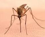 36e3ddce2761acd88b69_mosquito.jpg