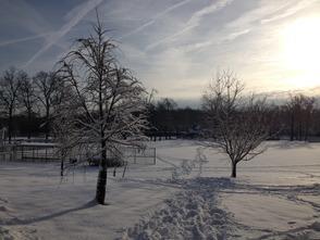 Memorial Park / Snow