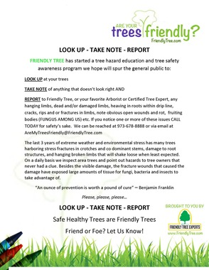 Tree Safety Checklist