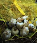 Thumb_be410b90381c0d3825bd_garlic_post