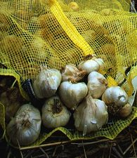 Top_story_be410b90381c0d3825bd_garlic_post