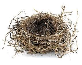 Carousel image 8cd7a4757cad47999c5d empty nest