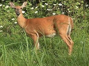 Carousel image b58c2fd9bc10314198af deer hunt
