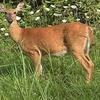 Small_thumb_b58c2fd9bc10314198af_deer_hunt