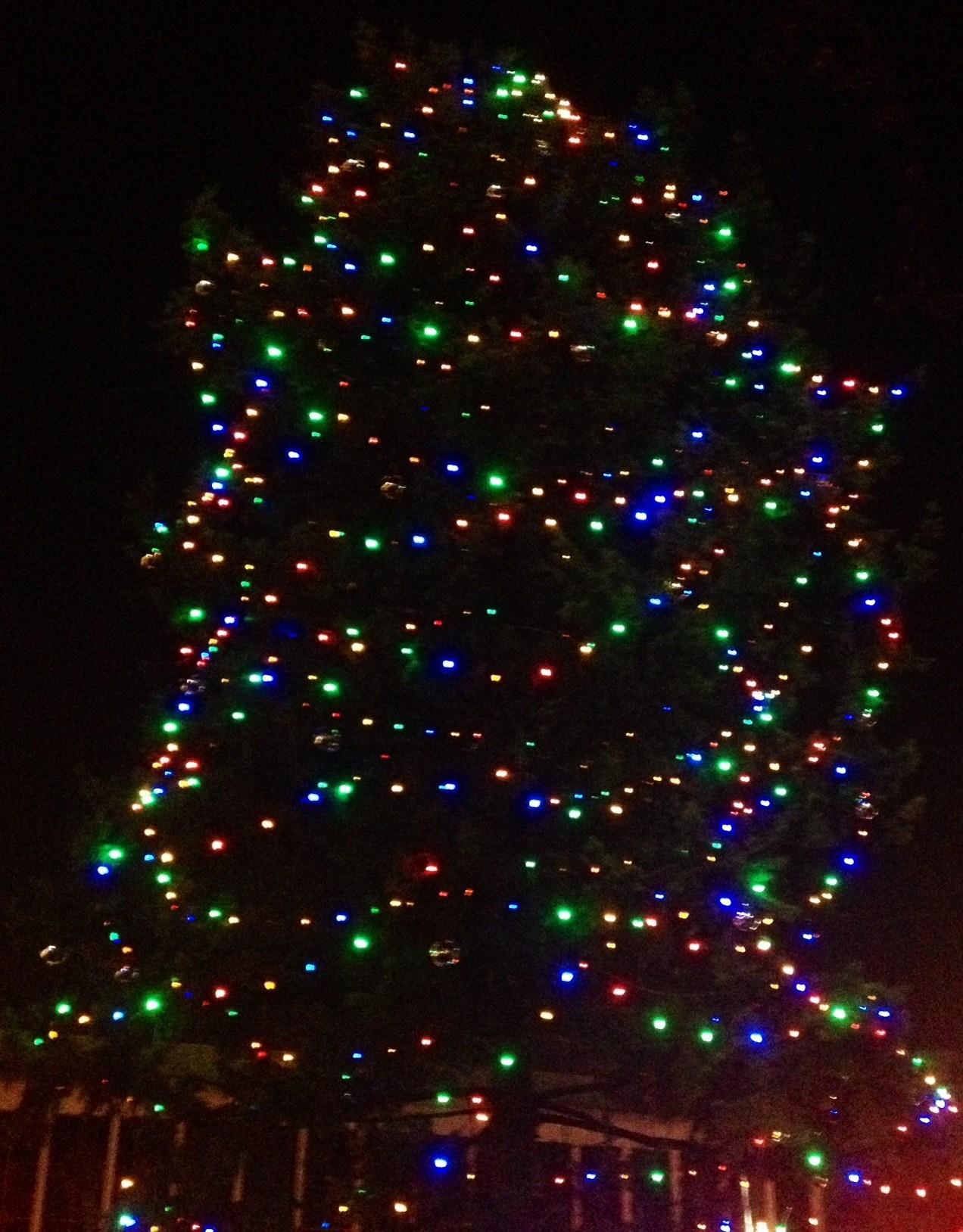 78424fc93598924e7eed_tree.jpg