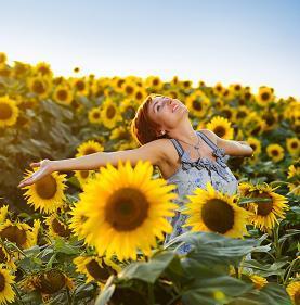 2c4fe9bc4610b8800fa1_Sunflowers_with_woman_sml.JPG