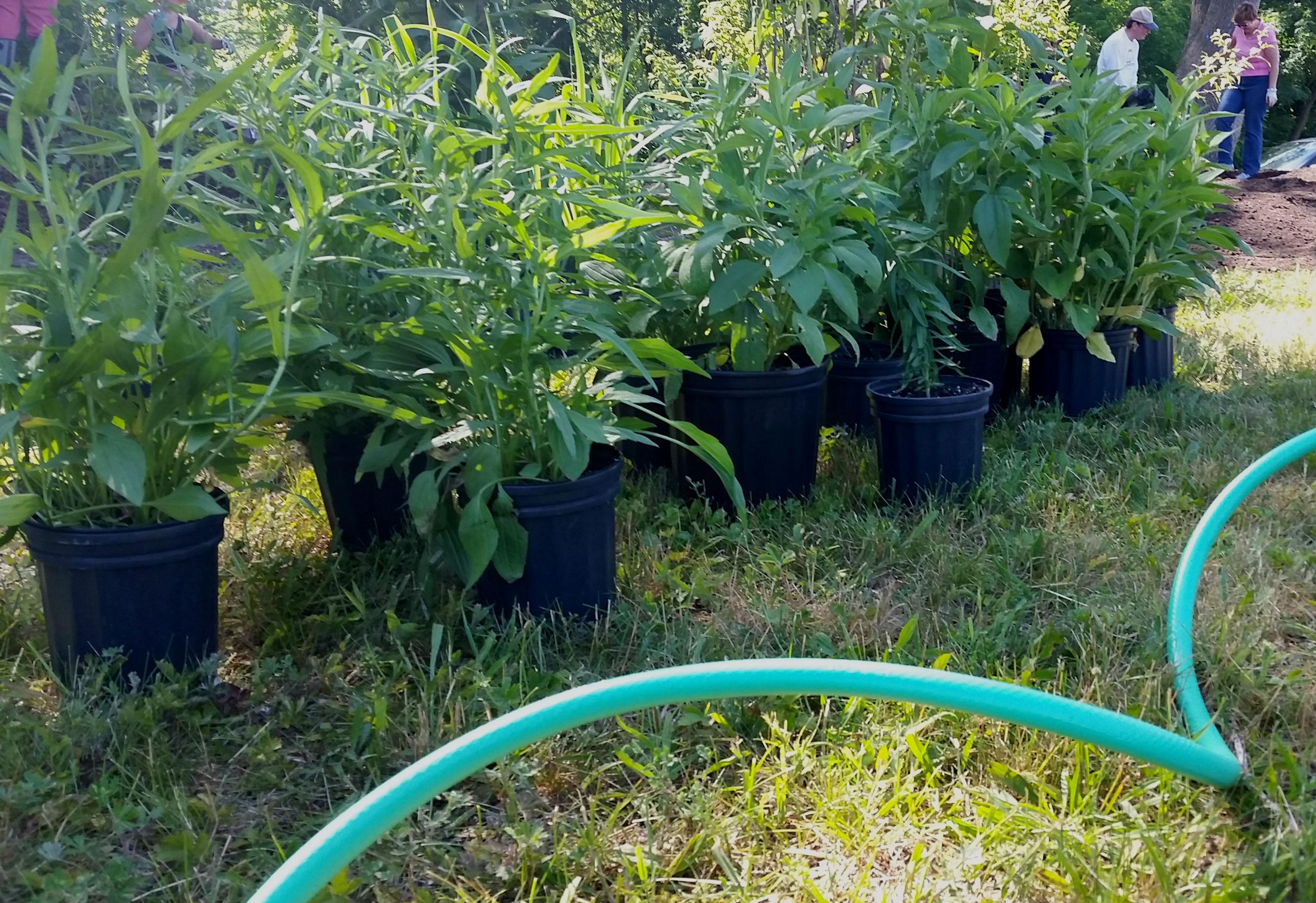 b3a35a289d58a4d5bf71_plants_waiting_setup.jpg