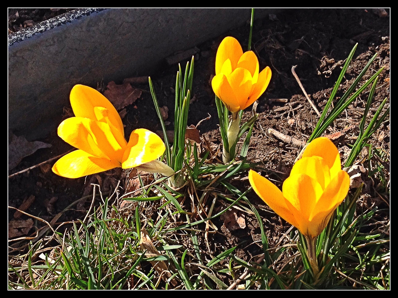 cf2db1677b8ae84b19a1_spring_flowers.JPG