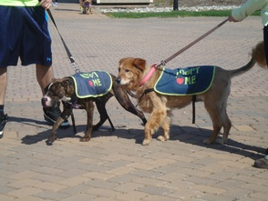 Furry Companions