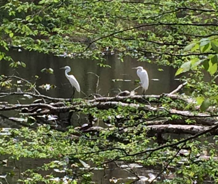 584f7dc29d16f007bb79_Fitness_paths_and_trails_2__Egrets_.jpg