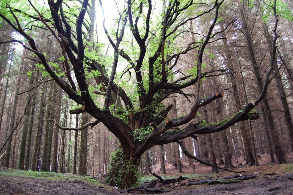 f8c24bf039118441079d_trees_subflux.JPG