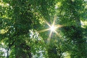 Carousel_image_442ca1cc729a3e80ae72_ac503749841e4b13a52b_join_the_master_tree_stewards_of_union_county