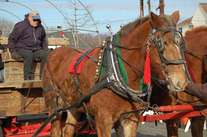 Hundreds Turn Out For Santa Visit and Horse-Drawn Wagon Rides, photo 22