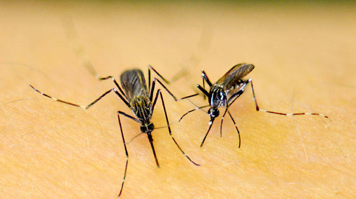 12b762c9c910ae6f9de5_Mosquito_nj.gov.jpg