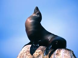 a435dbbca63bf55b97c6_sea_lion.jpg